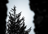 Tree Beyond The Wall by Nomis.