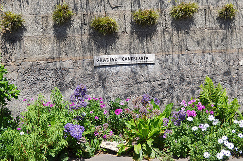 Flowers, Tegueste, Tenerife