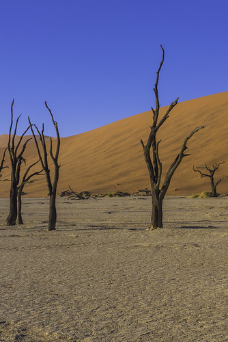 sky tree nature vertical sunrise landscape outdoors nationalpark sand day desert dune eerie unescoworldheritagesite unesco worldheritagesite un unitednations educational sanddune 自然 namibia acacia wattle otherworldly 자연 deadvlei 世界遗产 日出 國家公園 나무 camelthorn 일출 colorimage namibdesert 하늘 worldculturalheritage thorntree claypan 沙丘 hardap namibnaukluftnationalpark dooievlei acaciaerioloba whistlingthorn kameeldoring 纳米比亚 유네스코 사구 나미비아 국립공원 scientificandculturalorganization republicofnamibia 유네스코세계문화유산 namibsandsea giraffethorn vastplace lorganisationdesnationsuniespourl'éducation onuésc vachelliaerioloba 納米布諾克盧福國家公園 納米布沙漠 나미브사막 하르다프주 mogohlo mogôtlhô 金合欢 아카시아속