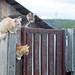 Cats gang :) by Виталий Сергеевич