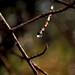 water drop by yara dib