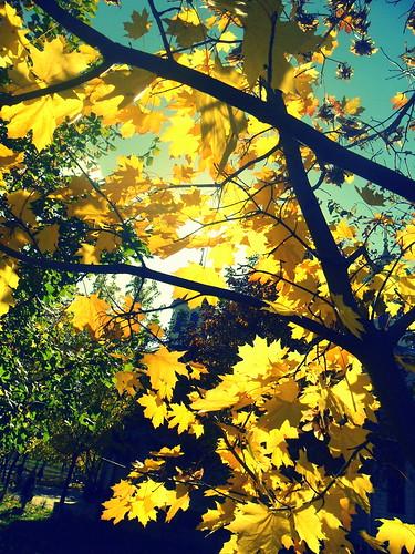 november autumn sunlight fall nature leaves season golden random soul sunnyday
