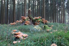 1. November 2015 - 16:45 - Impression Pilze im Wald
