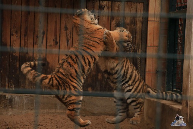 Tierpark Berlin 22.11.2015   073