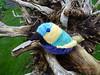 Bird in tree Dec 15
