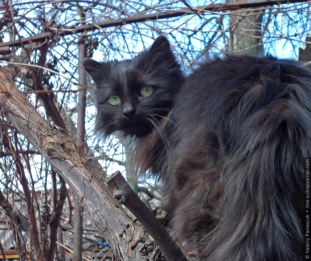 20150402_shevchenkove_cat_001