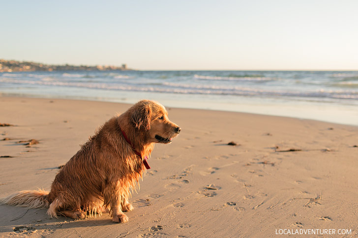 Blacks Beach Photos // La Jolla San Diego California