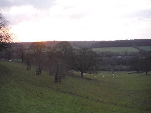 Chalkdell Wood, Great Missenden