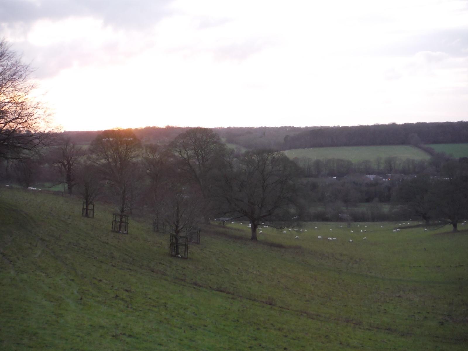 Chalkdell Wood, Great Missenden SWC Walk 140a Wendover to Great Missenden