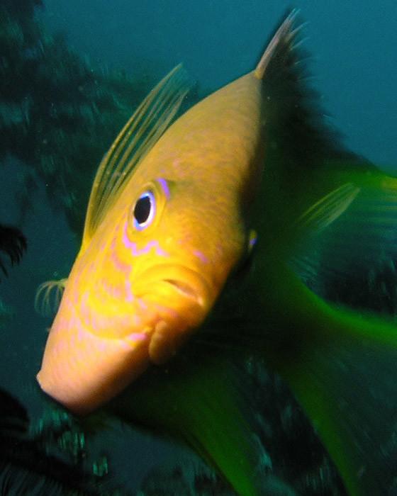 scuba diving Bali, Indonesia