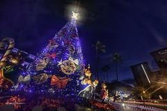 Honolulu City Lights 2015-16