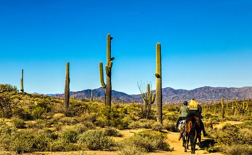 landscape horses arizona cactus mountains nature southwest