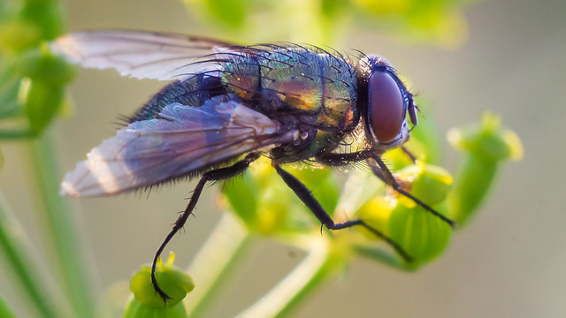 A fly, not flying :-)