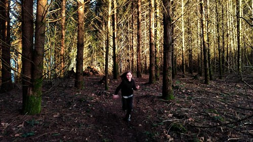 Sequoia racing the sunset. Seen while trail running. #kid #sunset #dusk #sundown #sunlight #shadowsandtalltrees #shade #trailrunning #trailrunner #trailrun #forest #woods  #beavercreekoregon #raysoflight