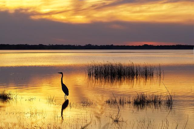 Golden sunset, Sony SLT-A58, Tamron SP 90mm F2.8 Di Macro 1:1 USD