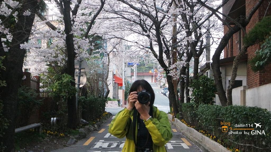 2019韓國賞櫻 全韓國櫻花攻略懶人包+櫻花綻放預測時間 (包含首爾、釜山、濟州等地)+ 韓國賞櫻一日團整理(每年持續更新) @Gina Lin