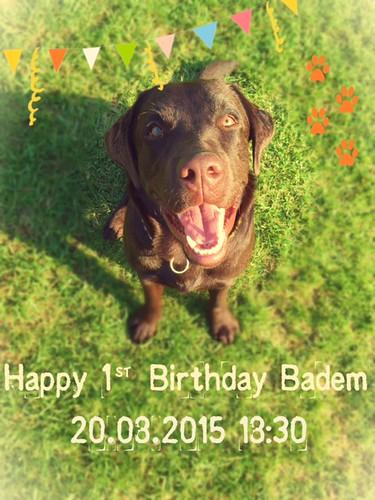Badem's 1st birthday!!