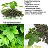 Fiveleaf Gynostemma, they call it the poor mans Ginseng by Natures SlimTea