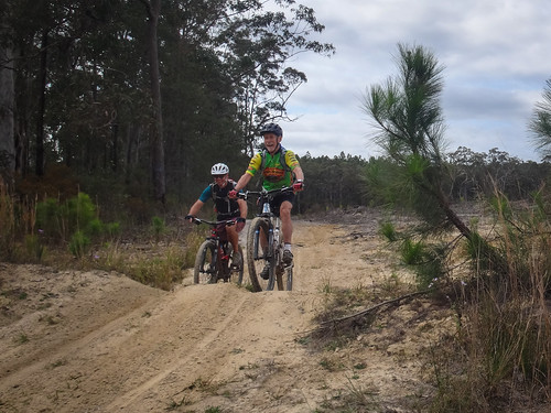 Ridinght through a pine plantation