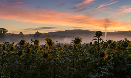 mountains sunrise farm newengland ct sunflower ellington jclay