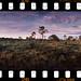 Pine Kingdom by tsiklonaut
