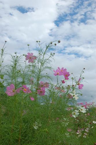 ★秋の花々と実り★藤野から・・・