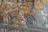 Fall in Paris by Gravitational Lens