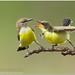 Purple Rumped Sunbird by Aravind Venkatraman