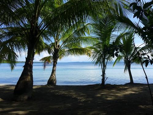 Boca del Drago - Panama