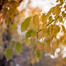 Fri, 12/11/2015 - 16:11 - Leaves in a swirly sky
