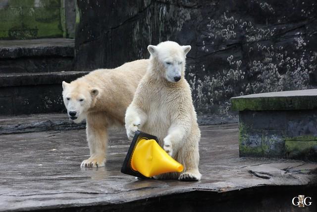 Besuch Zoo Rostock 13.12.201523