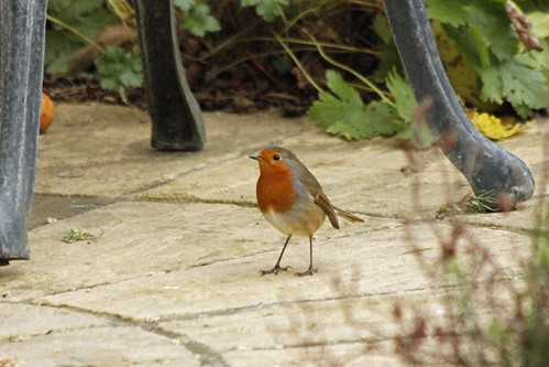 My garden wildlife December 2015