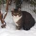 Bastian in the snow by Finn Frode (DK)