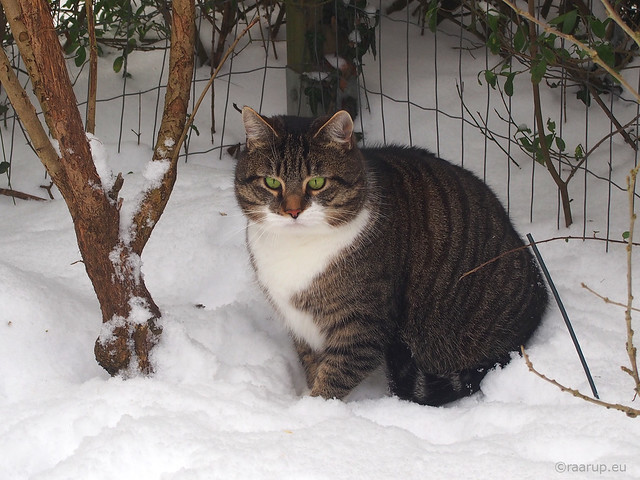 Bastian in the snow
