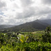 Small photo of Looking down on taro fields