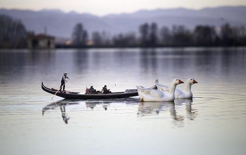 Sailing in nature