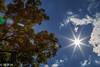 Sun Burst by m_hamad