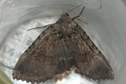 Moth 0202
