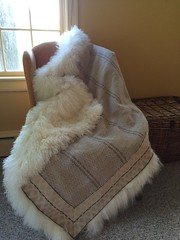 With sheepskin ready to be sewn on!