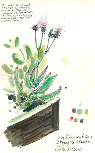 Sketchbook #91: My Succulent Box and Color Palette
