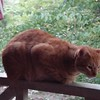Tracy Lee Kelly enjoying superb porch weather with me near twilight's last gleaming.