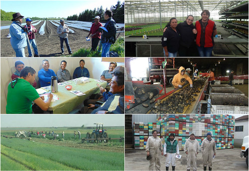 Concluye exitosamente el programa de protección preventiva a las granjas agrícolas en Alberta y Saskatchewan