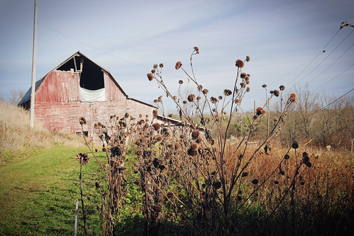 barn-sunflowers
