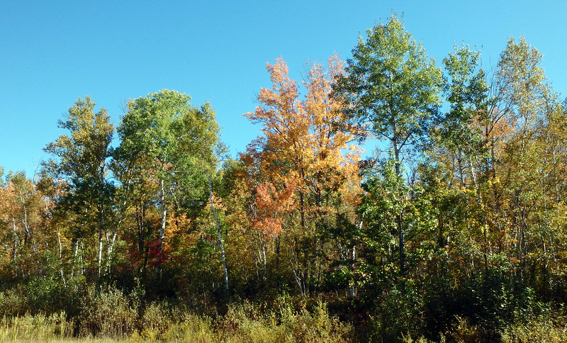 trees starting to change color - mostly green but some yellow and orange