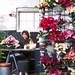 Die Poinsettie ist Pflanze des Monats November 2015