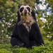Spectacled Bear - Photo (c) Steve Wilson - over 9 million views Thanks !!, some rights reserved (CC BY)
