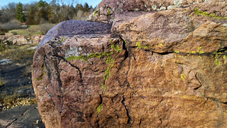 Lichen on a Sioux quartzite boulder