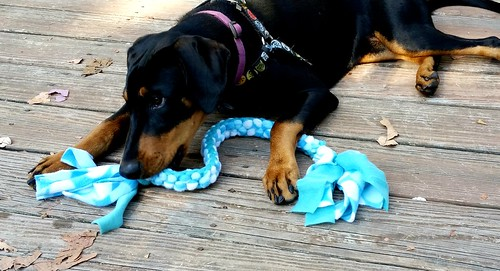 DIY Easy braided #dogtoy tug #InspiredByCrafted #LapdogCreations @LapdogCreations