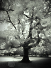 Muckross Gardens- IR photography