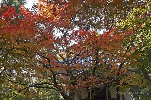 【写真】2014 紅葉 : 法然院/2018-10-19/IMGP7487